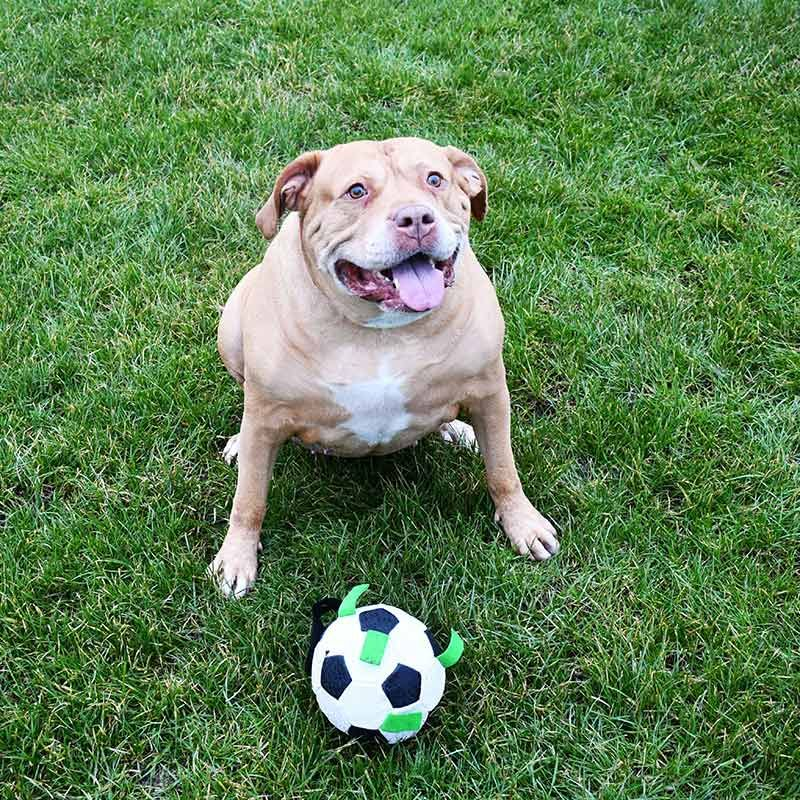black and white GIOCO soccer dog ball with durable nylon tabs from O'Neills